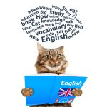 Imparare l'inglese - holidaymakers - #01 English Word
